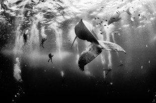 Διαγωνισμός φωτογραφίας στο National Geographic