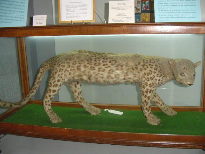 Παλαιοντολογικό Μουσείο