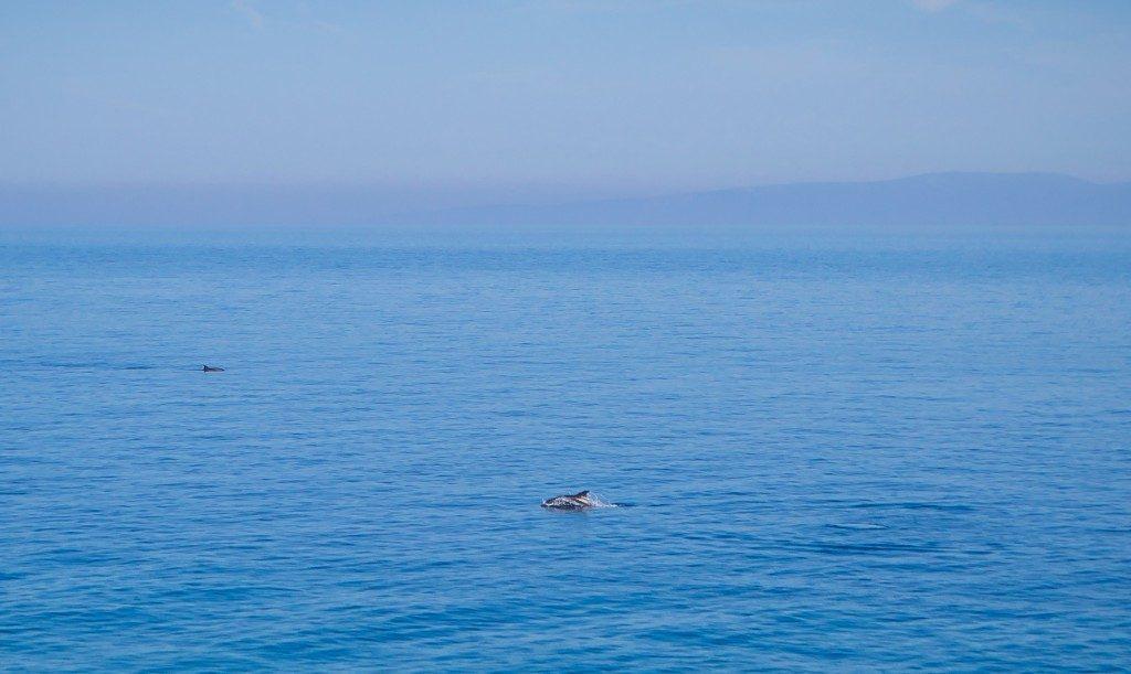 Κοπάδι δελφινιών στην Σάμο - Παιχνιδιάρικα πλατσουρίσματα