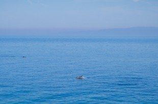 Κοπάδι με δελφίνια στην Σάμο 07