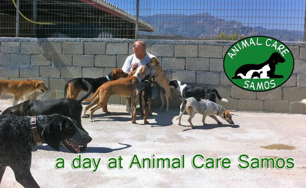 Το Καταφύγιο του Animal Care στη Σάμο