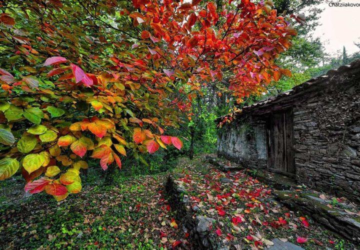 autumn1-xatziakovou-720x500