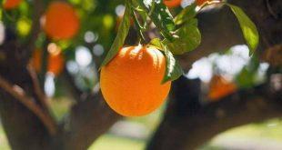 myloi-orange2019